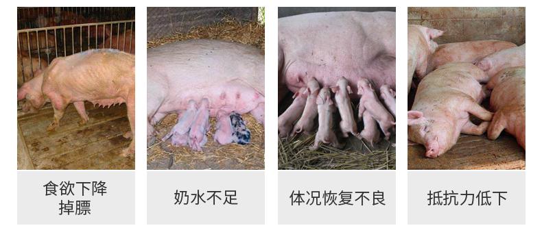 怀孕母猪预混料
