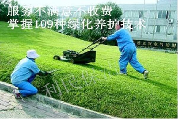 绿化养护.jpg